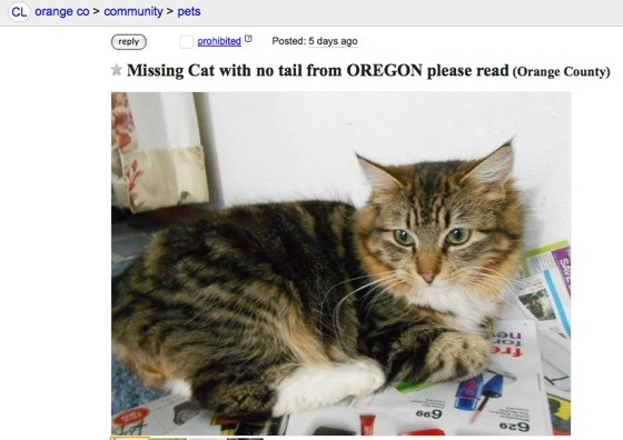 Oregonians Hope Someone In Garden Grove Has Seen Their Beloved Cat