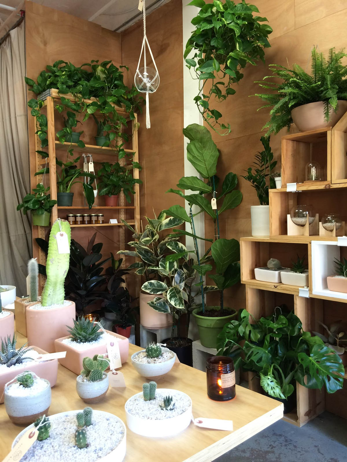 Astonishing Peacock Co Offers Hip House Plants From Its Long Beach Home Remodeling Inspirations Basidirectenergyitoicom