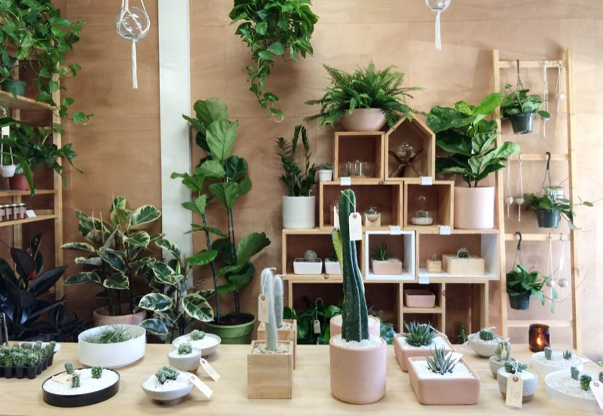 Superb Peacock Co Offers Hip House Plants From Its Long Beach Home Remodeling Inspirations Basidirectenergyitoicom