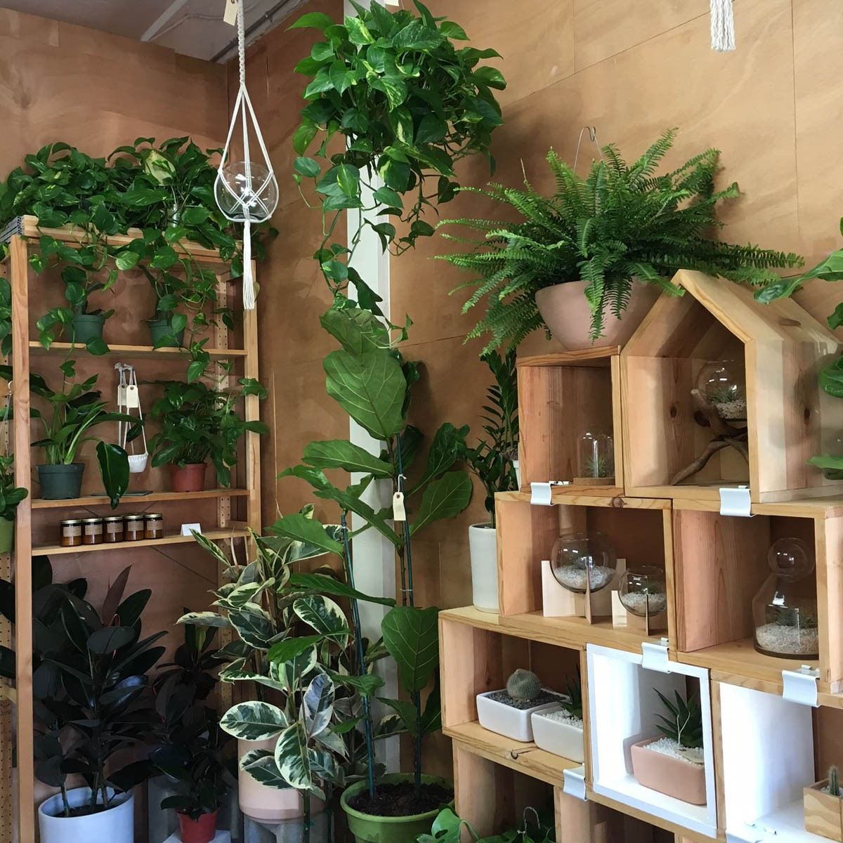 Sensational Peacock Co Offers Hip House Plants From Its Long Beach Home Remodeling Inspirations Basidirectenergyitoicom
