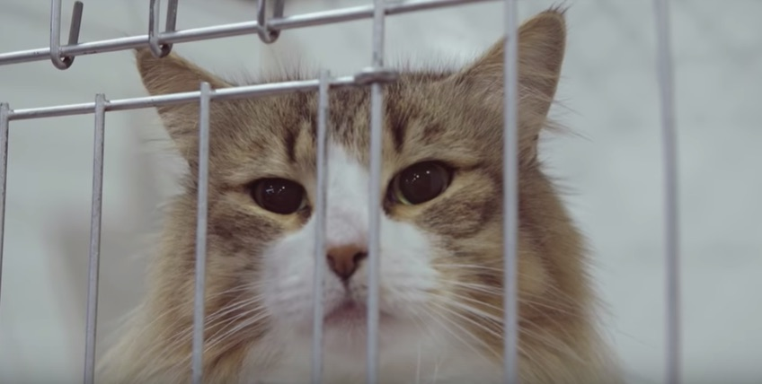 """Sweet Streams: """"Catwalk: Tales From the Cat Show Circuit"""""""