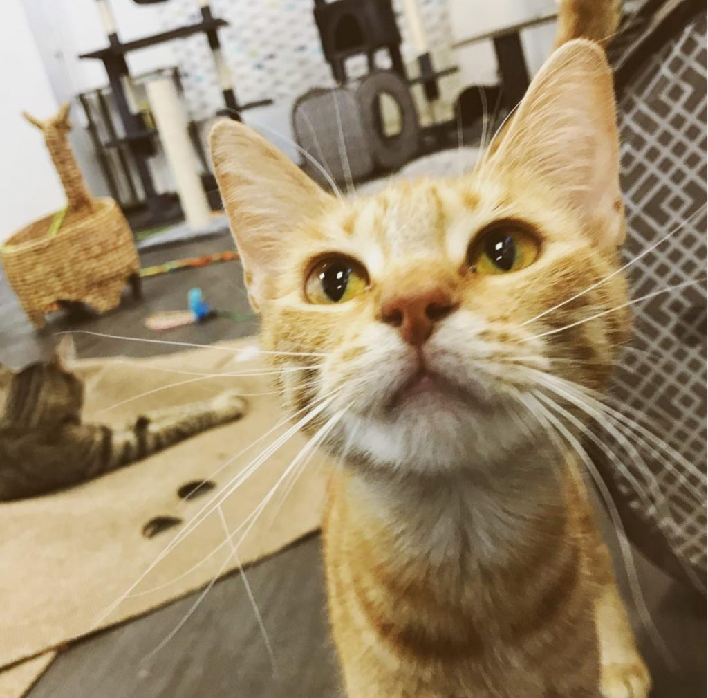 Now Open: A New Cat Cafe in Santa Ana and MORE!