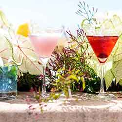 Casa Wellness: Botanical Cocktails Class